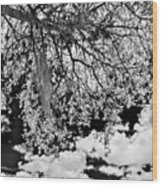 Infrared Indian River State College Hendry Campus #8 Wood Print