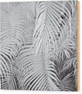 Infrared Palm Abstract Wood Print