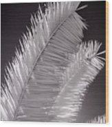 Infrared Palm Frond Wood Print