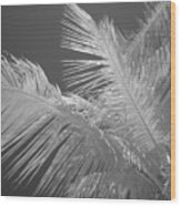Infrared Palm Trees Wood Print