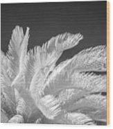 Infrared Sago Palm Wood Print