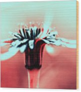Infrared Wildflower Wood Print