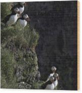 Ingolfshofthi Puffins Iceland 2898 Wood Print
