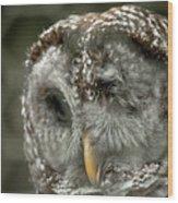 Injured Owl Wood Print