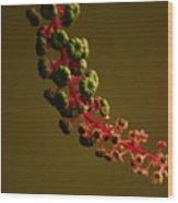 Inkberry Strand Wood Print