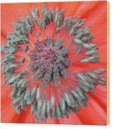 Inner Poppy Wood Print