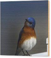 Inquisitive Bluebird Wood Print