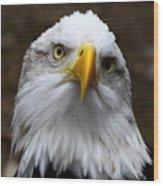 Inquisitive Eagle Wood Print