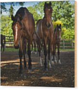 Inquisitive Horses Wood Print