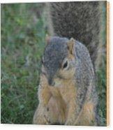 Inquisitive Squirrel Wood Print