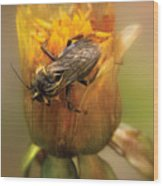 Insect - Bee - Dare To Bee Different Wood Print