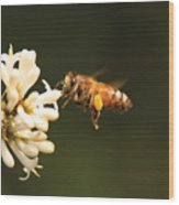 Insect - Bee - Honey I'm Home Wood Print