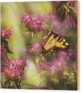 Insect - Butterfly - Golden Age  Wood Print