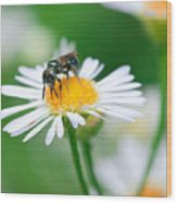 Insect Buffet Wood Print