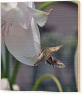 Insect In Flower Wood Print