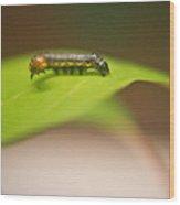 Insect Larva 1 Wood Print