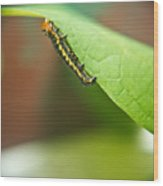 Insect Larva 2 Wood Print