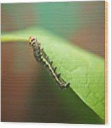 Insect Larva 3 Wood Print