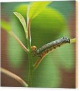 Insect Larva 5 Wood Print