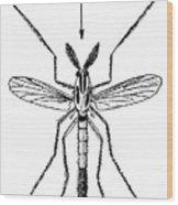 Insect: Midge Wood Print