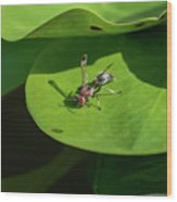 Insect On Lotus Leaf Wood Print
