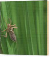 Insect Stain On The Leaf Wood Print