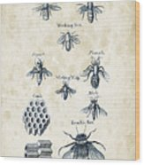 Insects - 1792 - 14 Wood Print