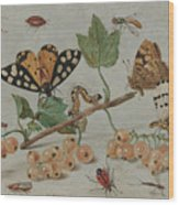 Insects And Fruit, Wood Print