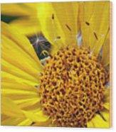 Inside Sunflower Wood Print