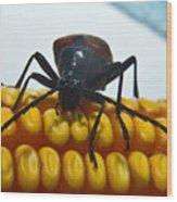 Inspecting Beetle Wood Print