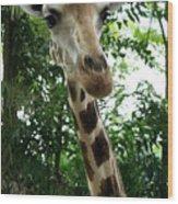 Inspector Giraffe Wood Print