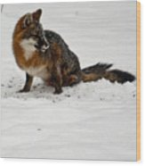 Intent Red Fox Wood Print