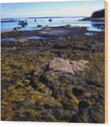 Inter-tidal Zone Deer Isle Wood Print