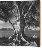 Intercoastal Pine Wood Print