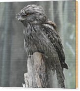 Interesting Tawny Frogmouth Perched On A Tree Stump Wood Print