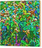 Intergalactic Orange Grove Wood Print