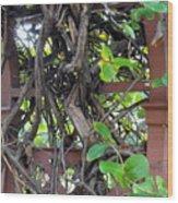 Intertwined Vine Trellis Wood Print