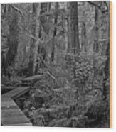Into A Magical World Black And White Wood Print