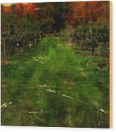 Into The Apple Orchard Wood Print