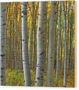 Into The Aspens Wood Print