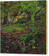 Into The Forest Of Fontainebleau Wood Print