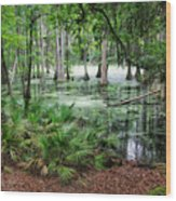 Into The Green Swamp Wood Print