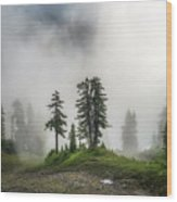 Into The Myst Wood Print