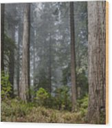 Into The Redwood Forest Wood Print