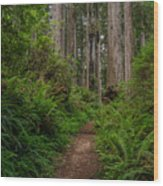 Into The Redwoods Wood Print