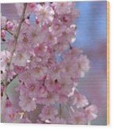 Into The Sakura - Japanese Cherry Blossom Wood Print