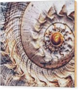Into The Spiral Wood Print