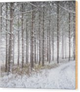Into The Woods 3 - Winter At Retzer Nature Center  Wood Print