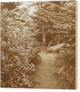 Into The Woods Sepia Wood Print