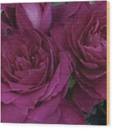 Intrigue Rose Wood Print